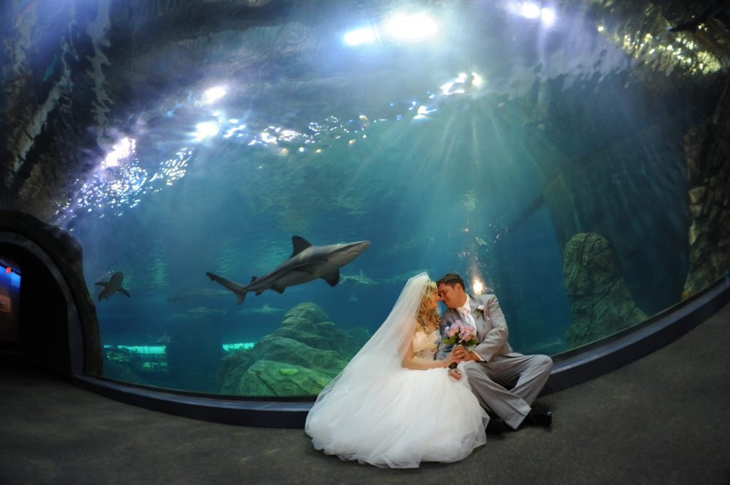 Adventure Aquarium Wedding Photography Dj